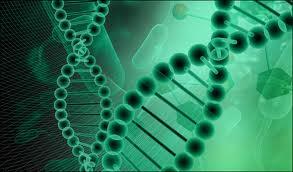 genetik3